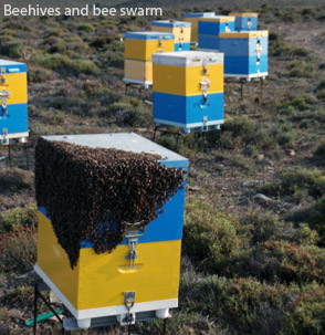 Beehives and bee swarm