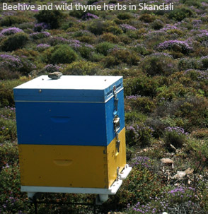 Beehive and wild thyme herbs in Skandali