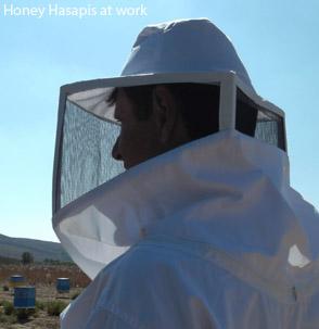 Honey Hasapis at work