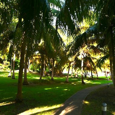 Le parc tropical de l' Anse des Rochers