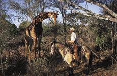 Voyage à cheval en Afrique du Sud