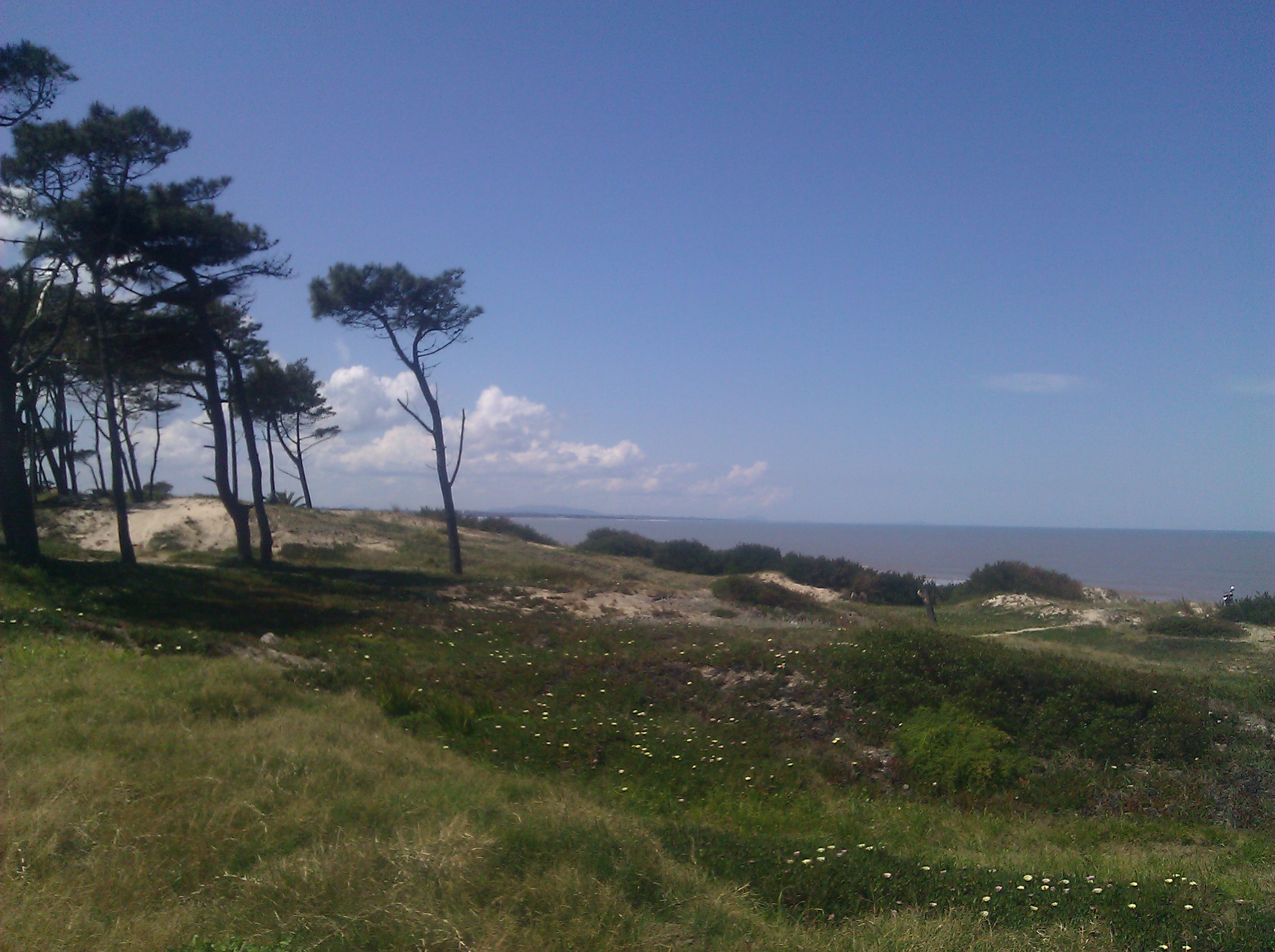 Windswept trees, dune grasses, and the blue sea