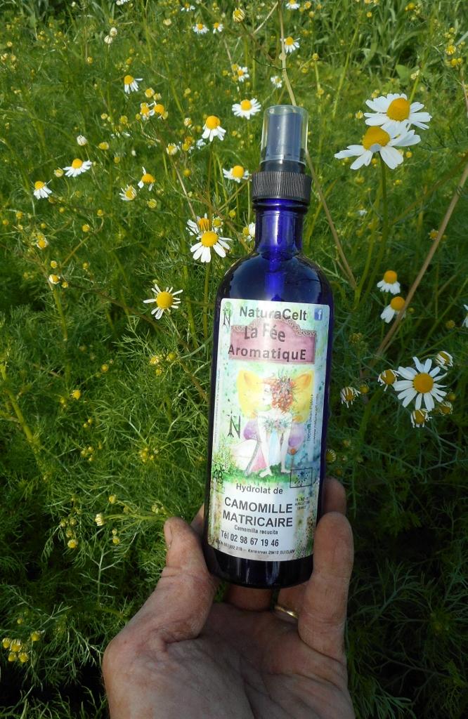 eau florale de camomille matricaire ou hydrolat produit en bretagne france en directe du producteur visite de la distillerie