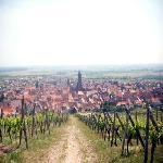 Dambach la Villedepuis les vignes
