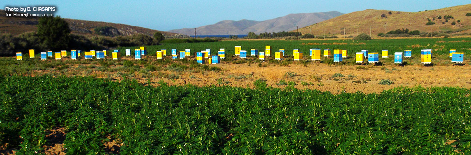 HoneyLimnos. Dimitrios Hasapis business & beehive installation in Moudros. Greek wild thyme honey, propolis, royal jellly products