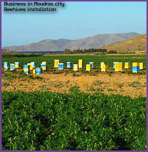 HoneyLimnos. Dimitrios Hasapis business & beehive installation in Moudros. Greek wild thyme honey products