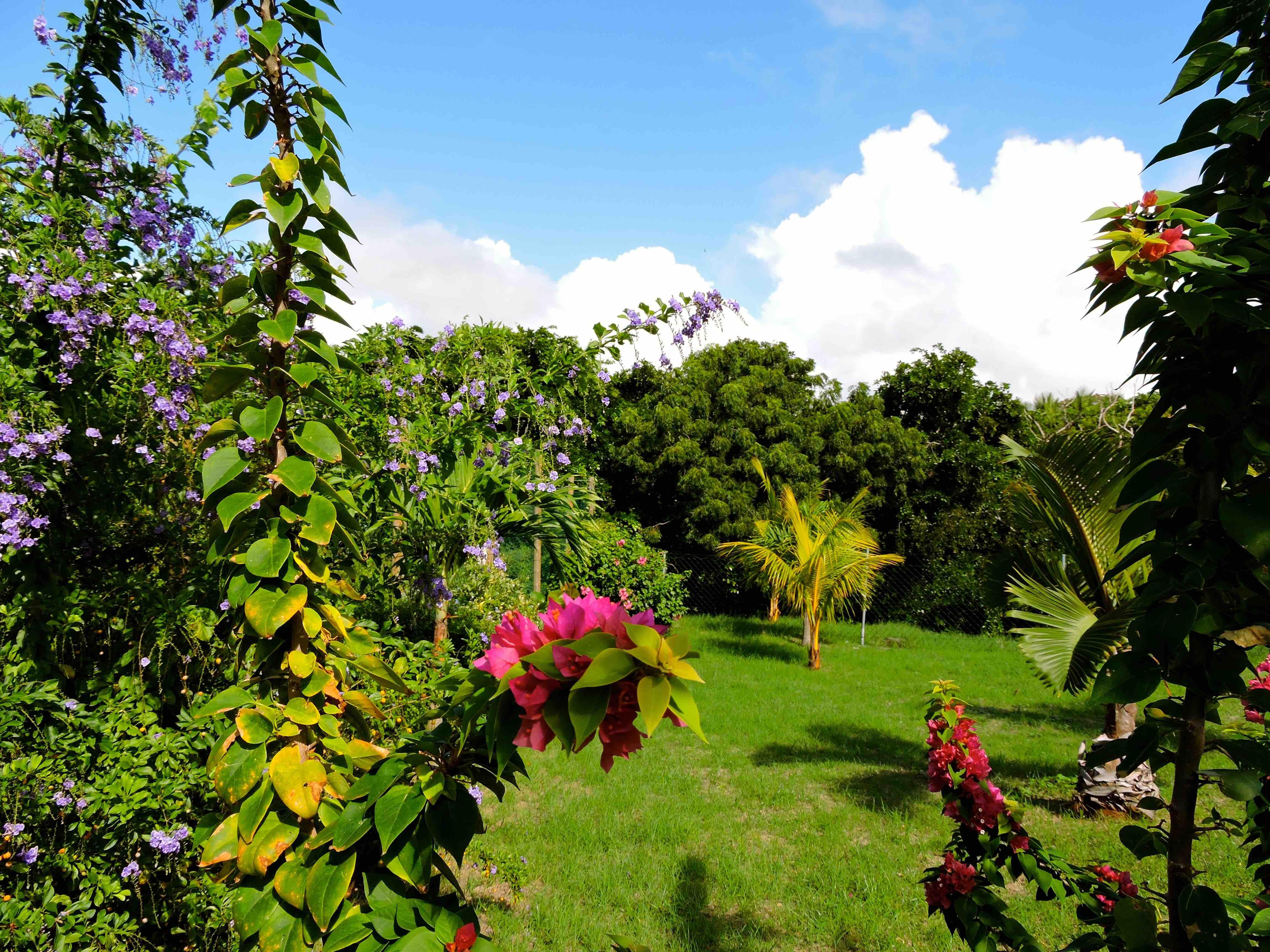 Photos for Jardin 70 m2