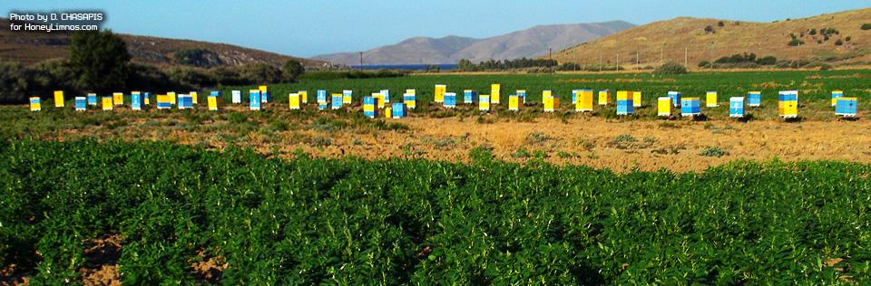 MeliLimnou. Επιχείρηση μελισσοκομίας Δ. Χασάπη και εγκατάσταση κυψελών στο Μούδρο. Ελληνικο αγριο θυμαρισιο μελι, πρόπολη, βασιλικός πολτός και αλλα προϊόντα