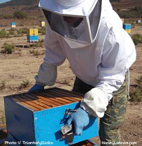 MeliLimnou: Ο Δημήτρης Χασάπης (HoneyHasapis) εν ώρα εργασίας