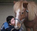 Le poney shetland junior