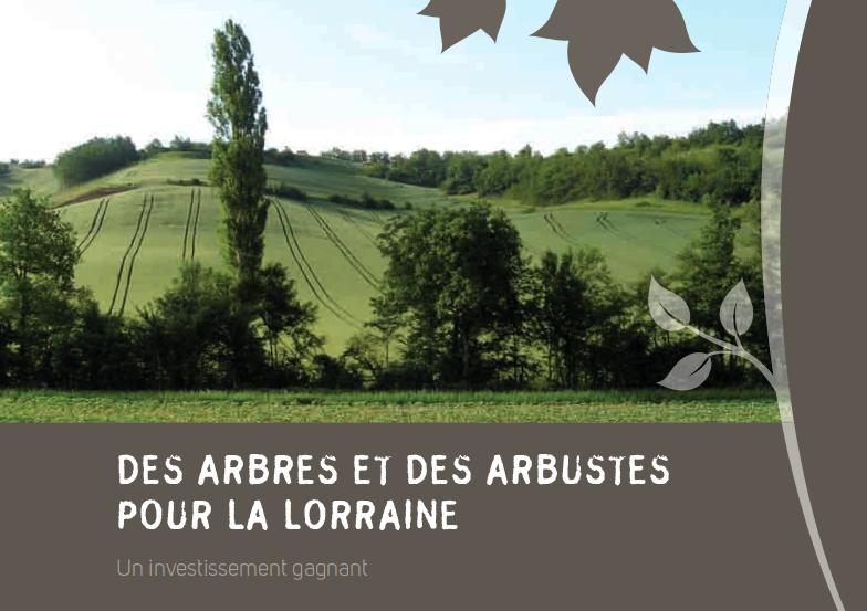 Agroforesterie lorraine for Reglementation elagage des arbres