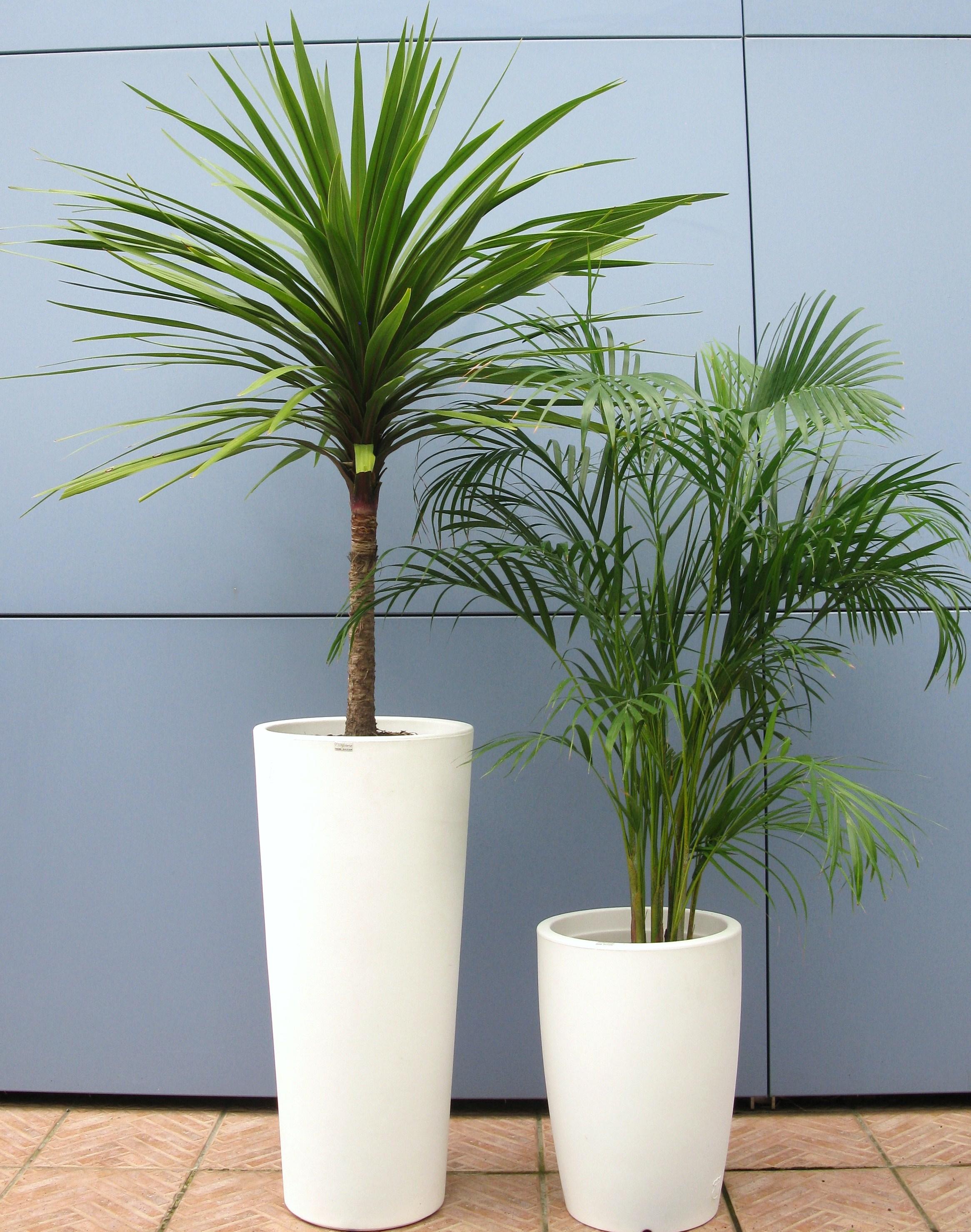 D 39 co verte location plantes mur v g tal toulouse - Puceron blanc plante verte ...