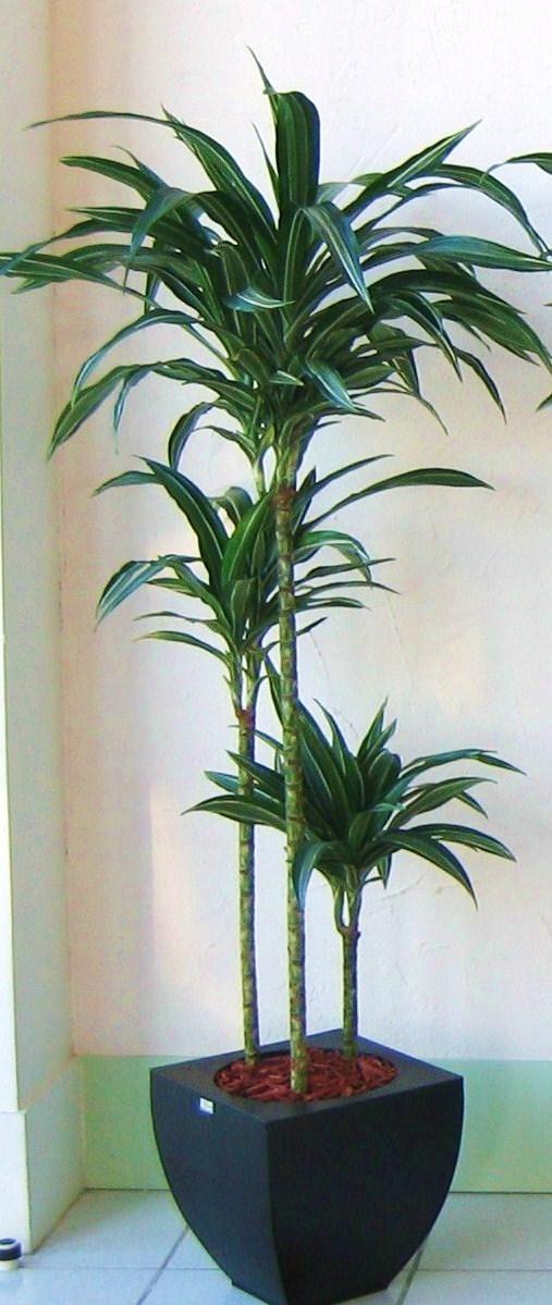 D 39 co verte location plantes mur v g tal toulouse for Mini plante verte