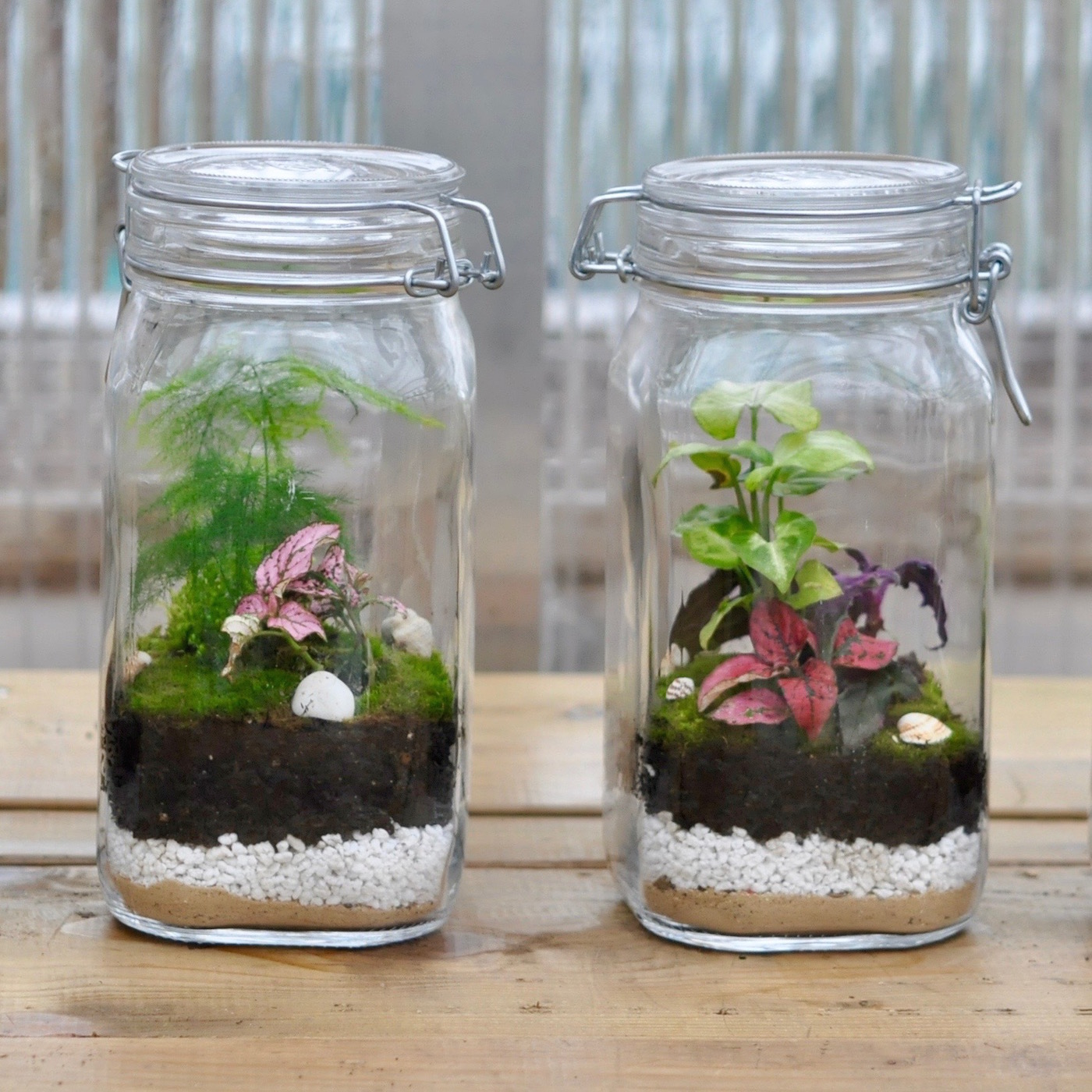 ATELIER DIY GRAND TERRARIUM
