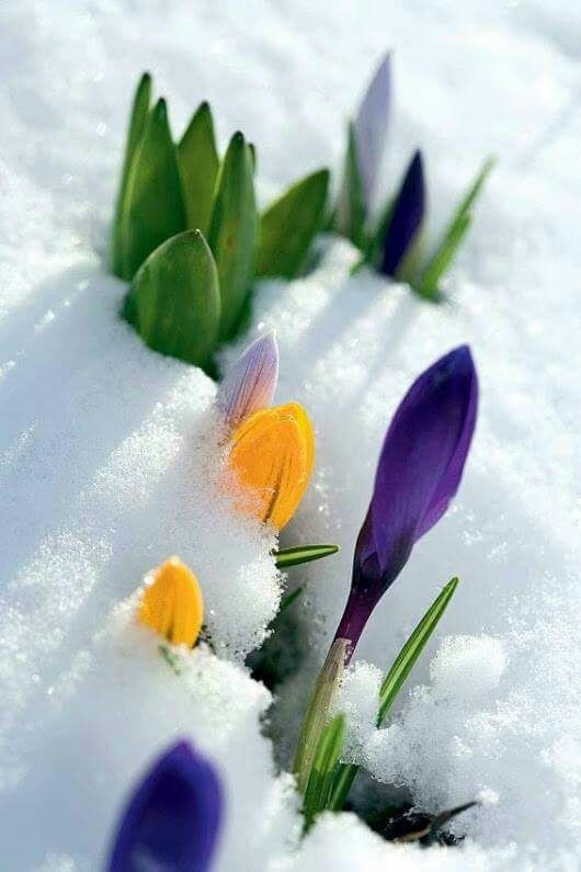 pousse printempsjpg