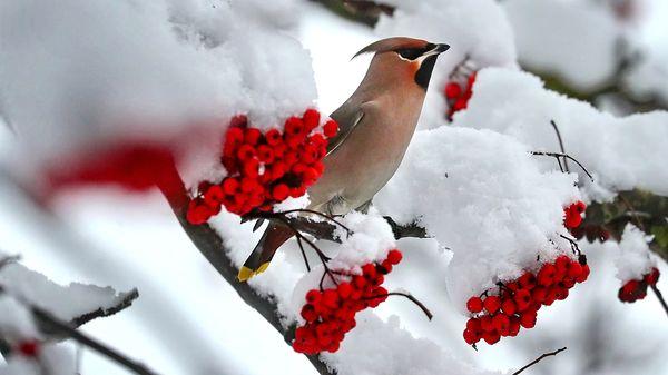 600x337_oiseau_neigejpg